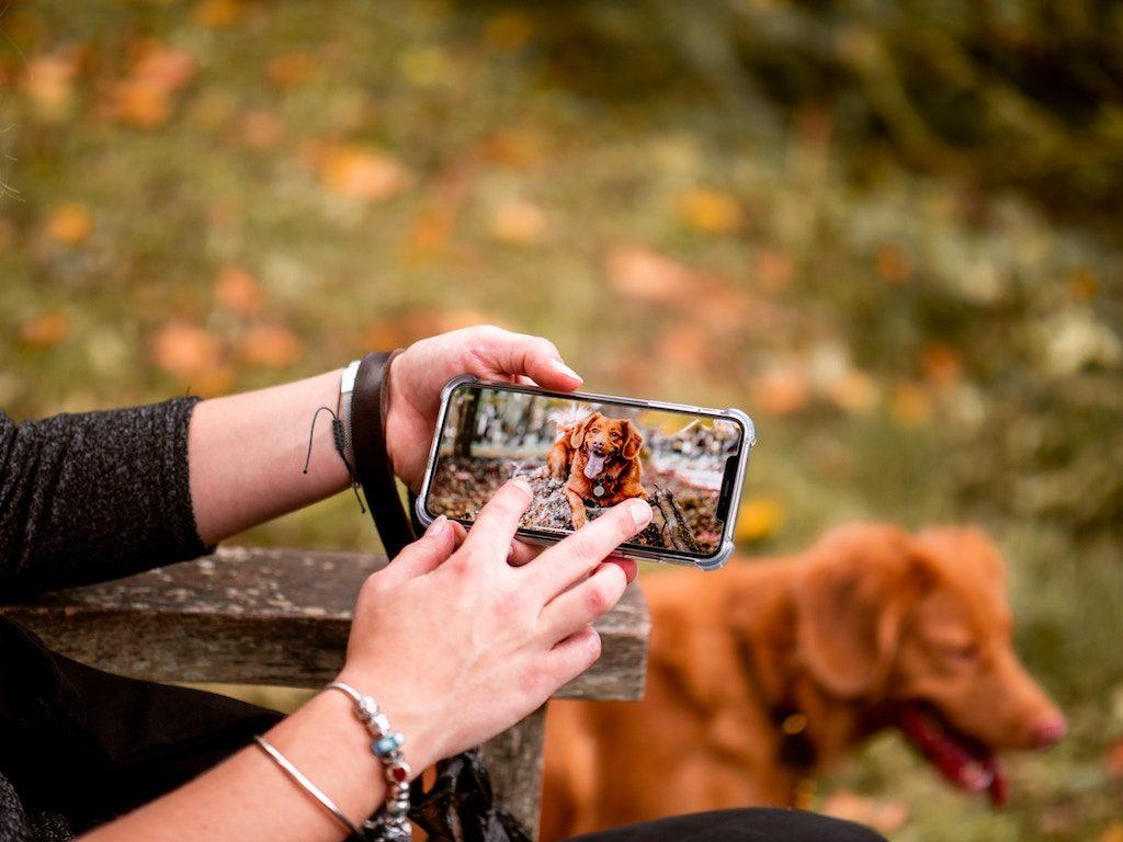 スマートフォンで犬を撮影している様子