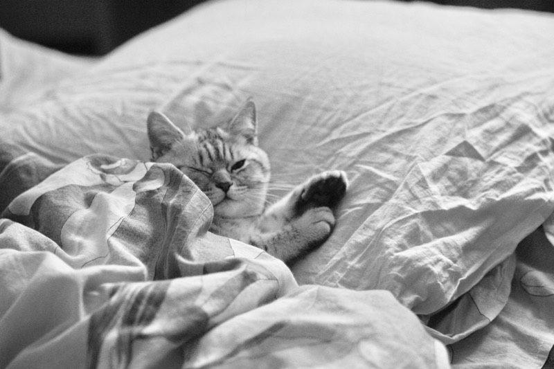 ザ・深夜便の睡眠対策。あなたを快眠に導くネックピロー7選。海外100フライト超えのベテランが厳選おすすめ。