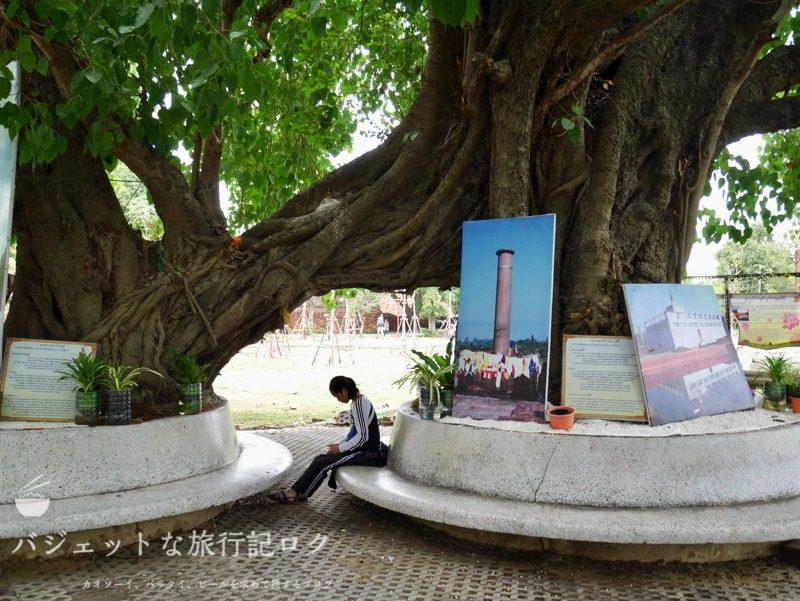 世界遺産アユタヤ観光のワット・プラ・シーサンペット(木の下で何かをする少女)
